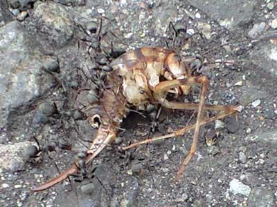 アリと変な虫の写真